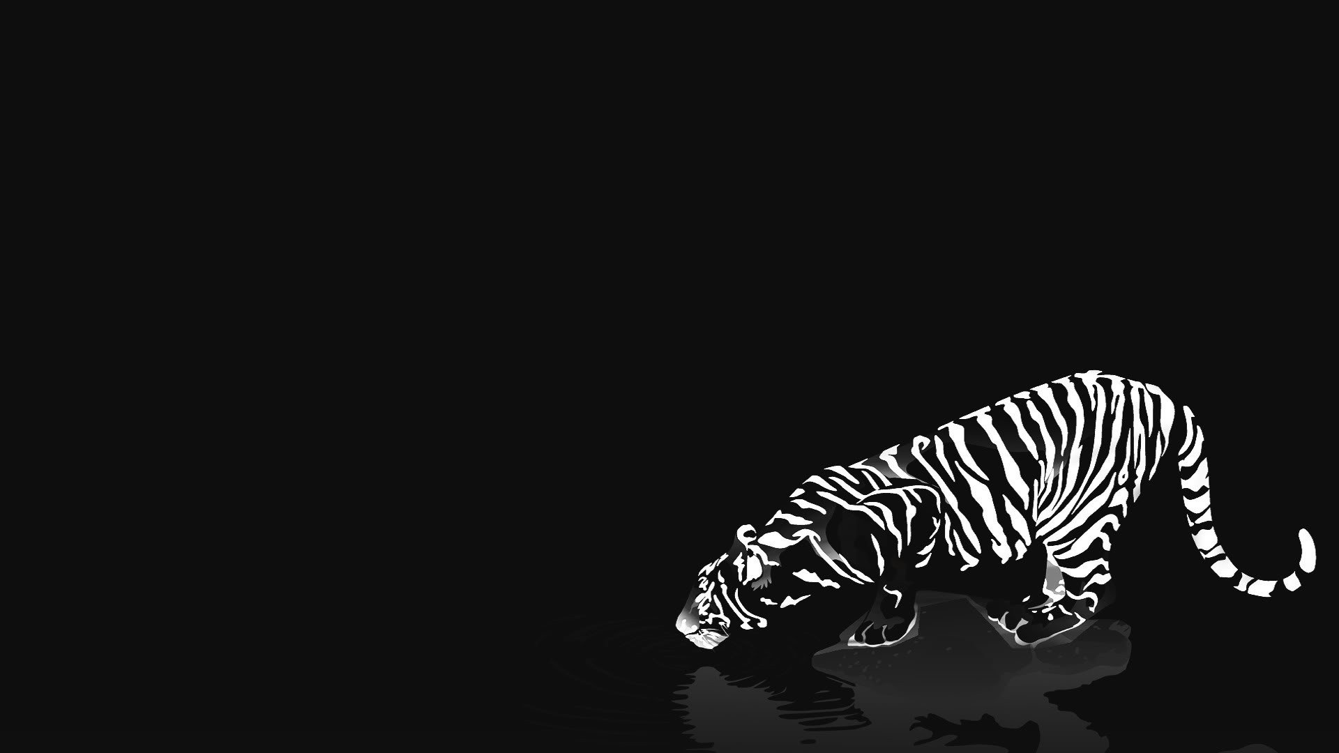 Black and White leopard